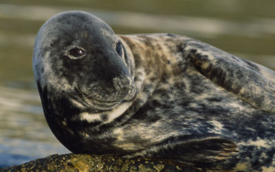 Wildlife to see in November – Grey Seals