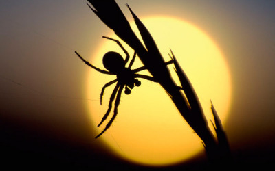Wildlife to see in October – Spiders